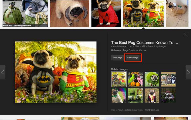 Tasto vedi immagine Google cuccioli