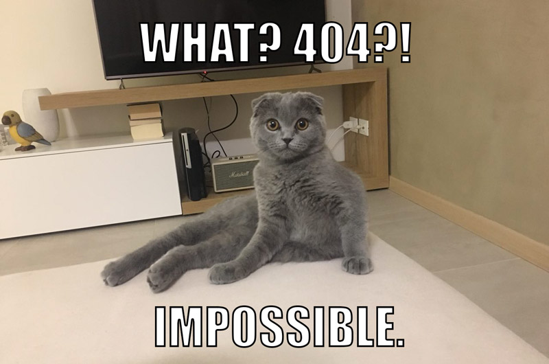 Meme errore 404 gatto|Pagina 404 standard|Pagina 404 Spotify|Pagina 404 Zalando|Search console scheda con link da|Screaming Frog errori 404|Search Console errori di scansione